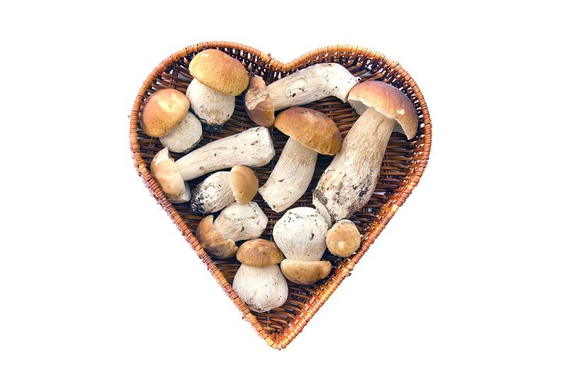 белые грибы свежие